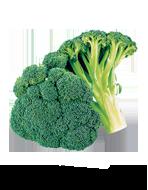 broccolo-